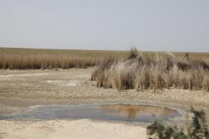 Hour-ol-Azim Wetland