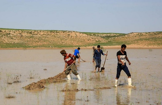 Volunteers working on water pools around lake Bazangan in may 2016